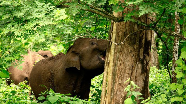 Muthunga Wildlife Sanctuary