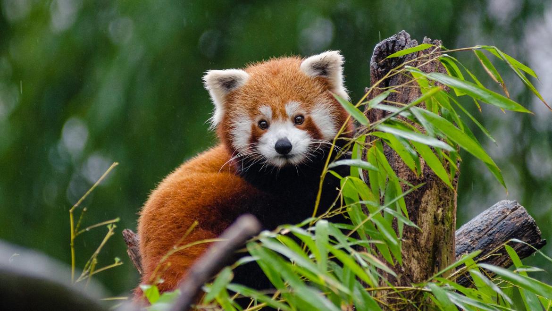 12 Wildlife Places to Visit during Monsoon Season