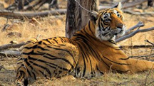 North and Central India Tiger Tour