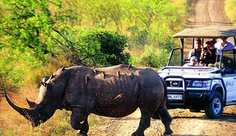 Safari in Kaziranga National Park