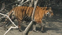 Wild Sunderbans Holiday Tour