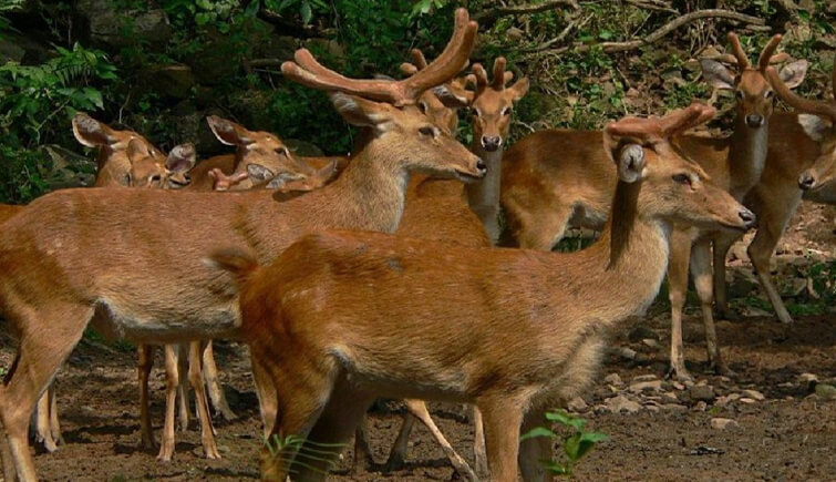 Manipur Zoological Garden
