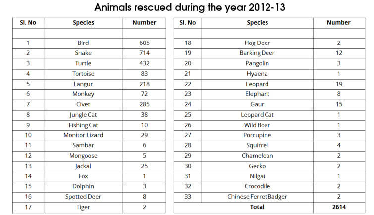 Animals-rescued-in-2012-13