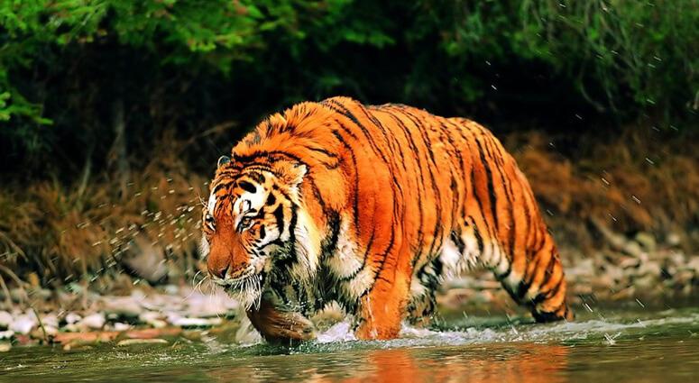 Rescue-of-Wildlife-in-West-Bengal