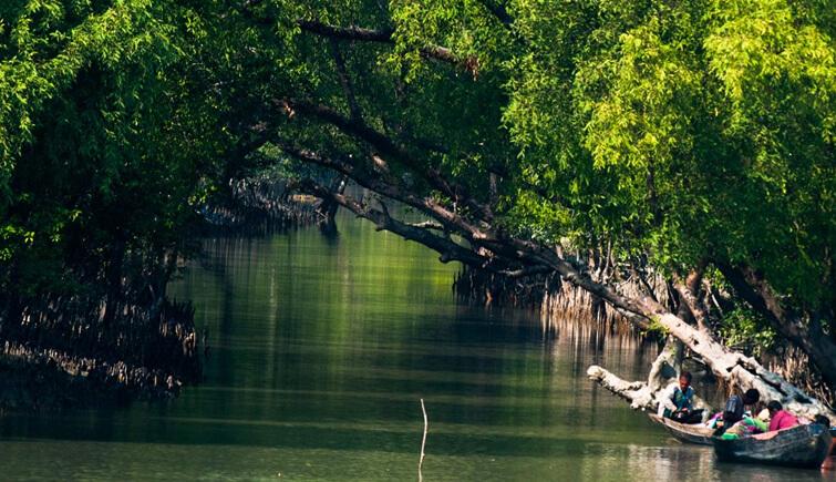 Sunderban-Mangrove
