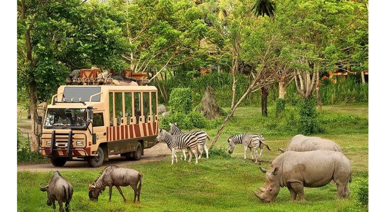 wildlife-safari-in-Komodo-National-Park