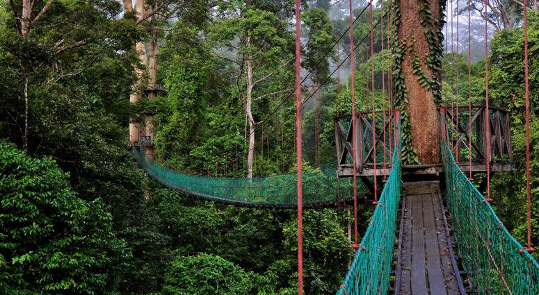 Walk amidst the Wet Wilderness of Rainforest Canopies