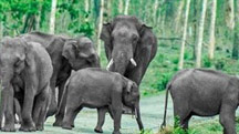 Assam & Arunachal Widlife Tour