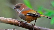 Birding Tour in North East India