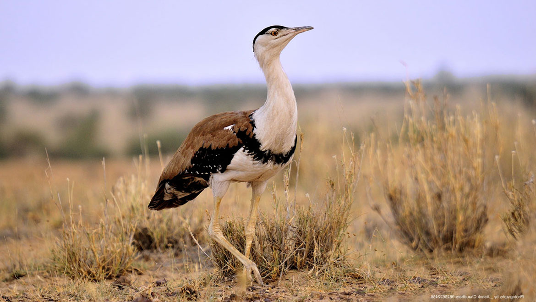 save birds information