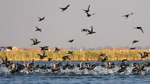 Gujarat Wildlife and Bird Watching Tour