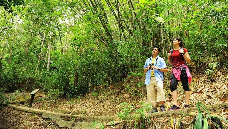 Jungle Walk at Polo Forest