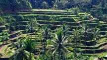 Bali - Ubud Holiday Tour