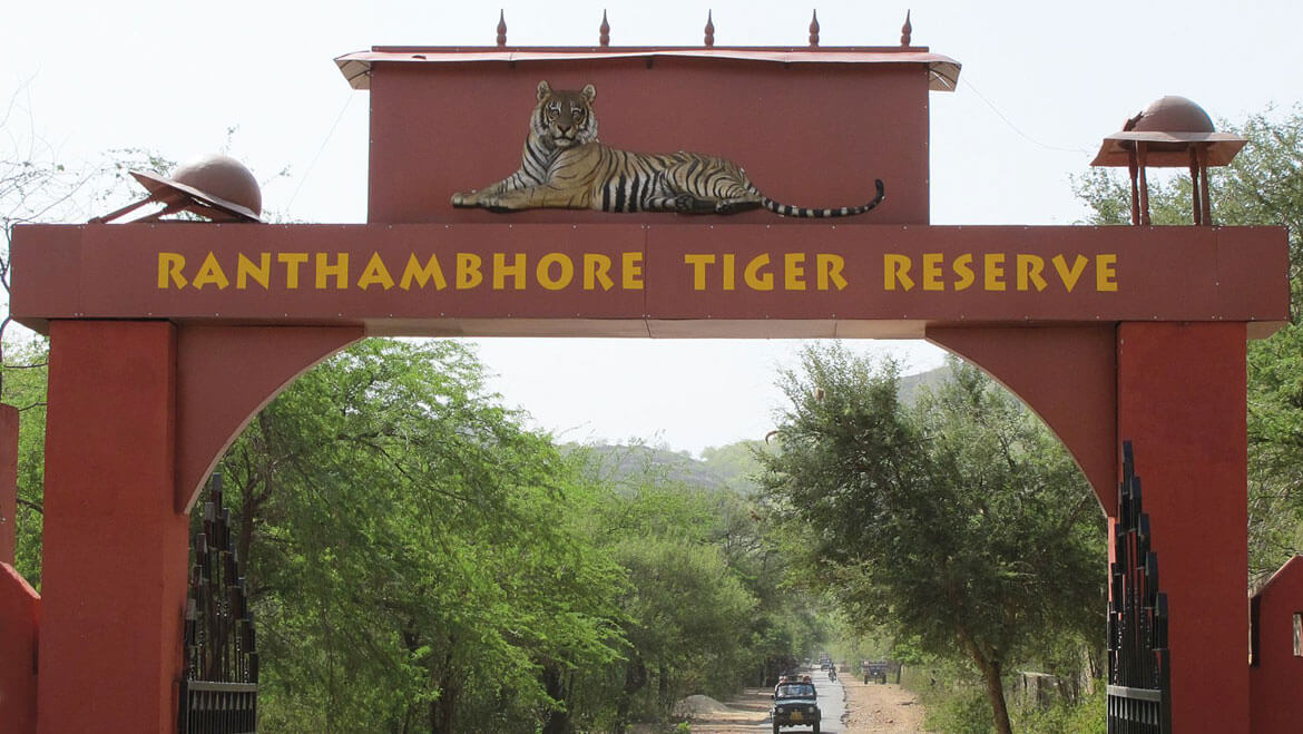 Tiger T-77 Disappears from Ranthambhore National Park