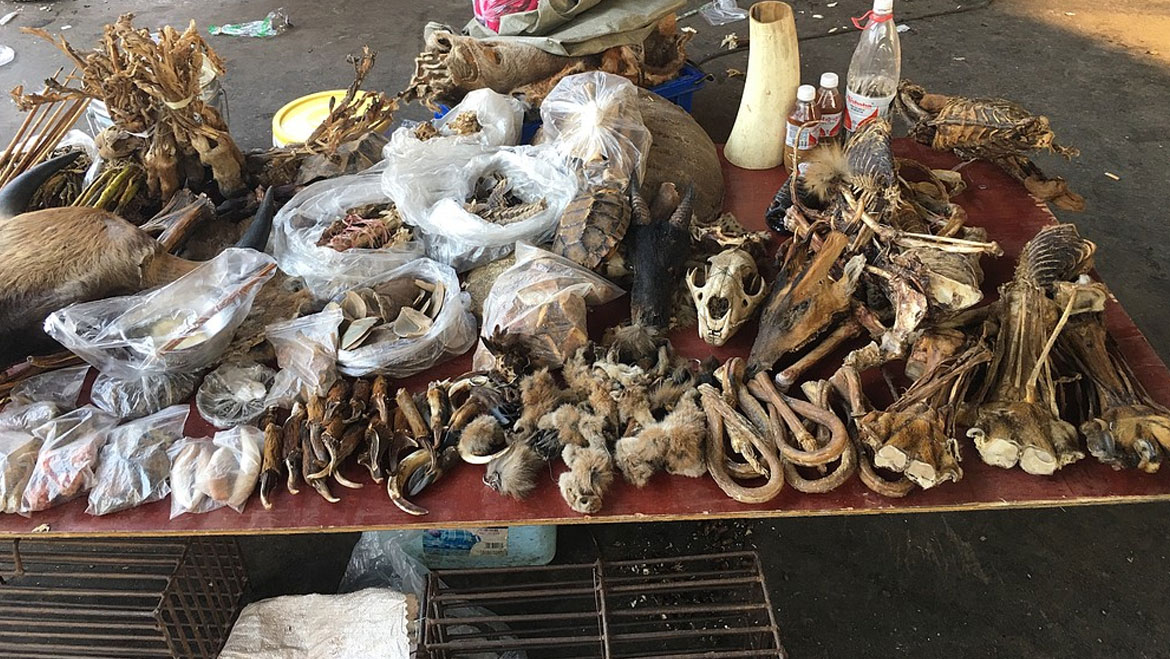 Fight Against the Illegal Wildlife Trade: An Attempt to Save The Endangered