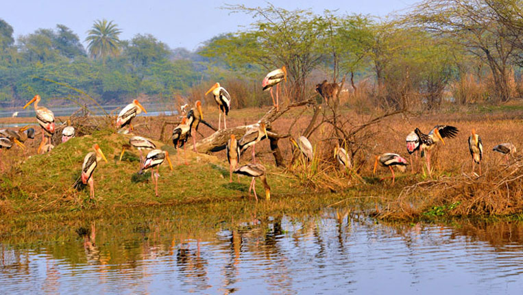 Birds in Rajasthan