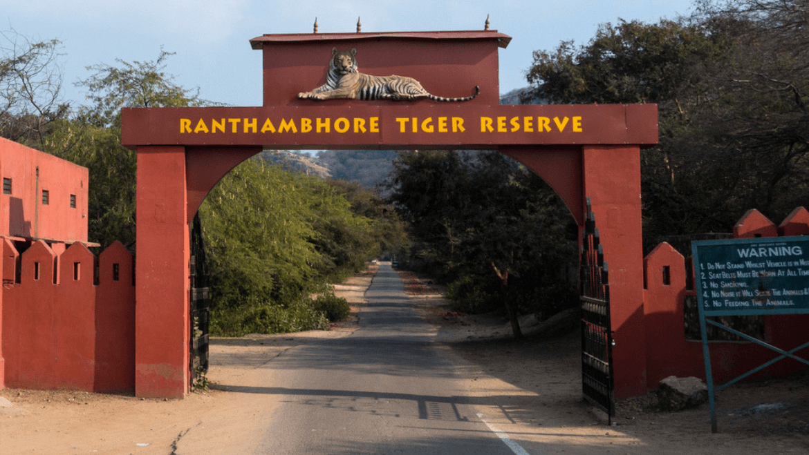 Good News Amidst Chaos: Two Tiger Cubs Spotted in Ranthambore National Park