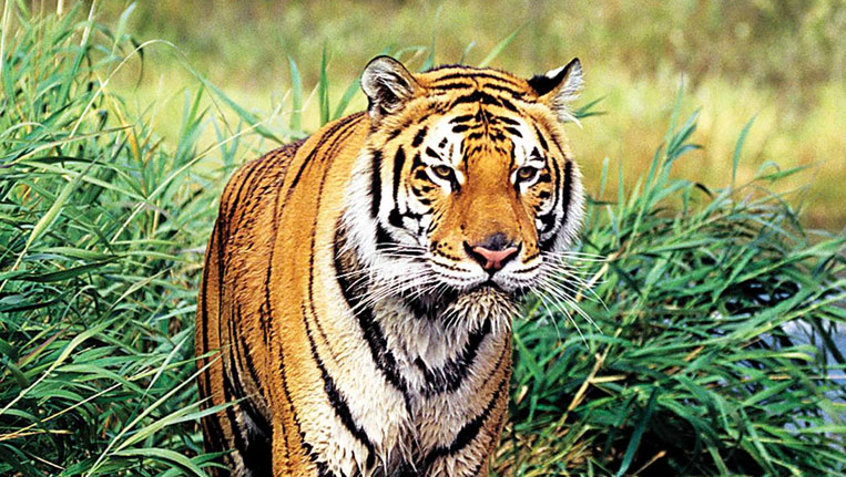 When is Udaipur Nature Literature Festival