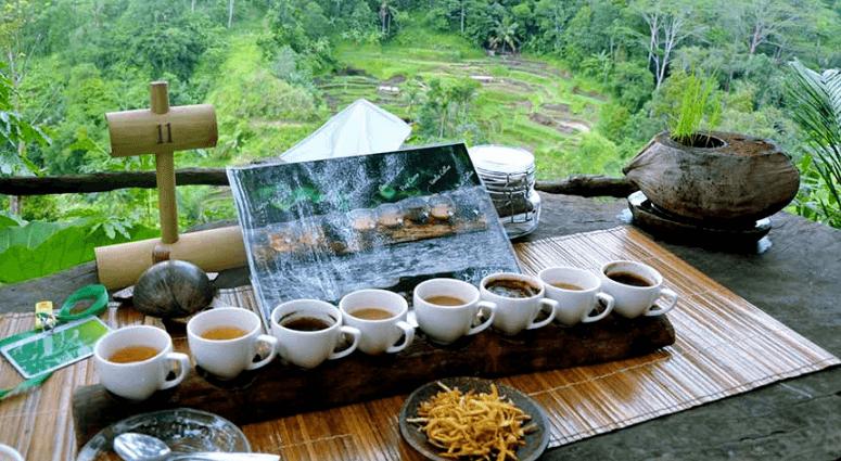 Coffee Plantation1