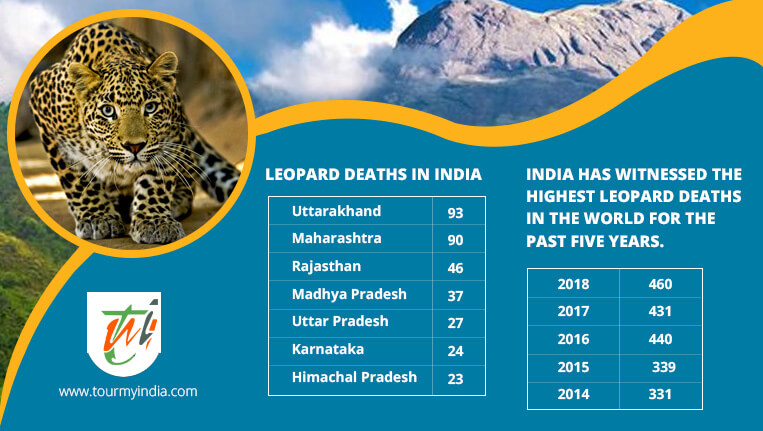 Leopards Deaths in India