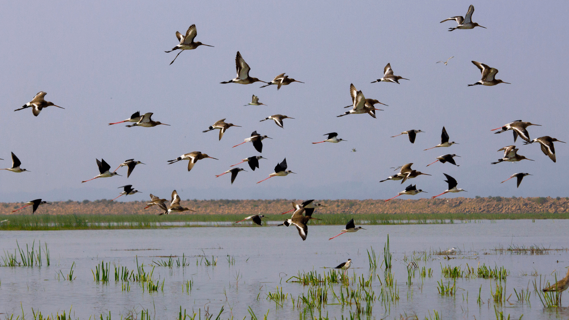 Restoring the Natural Order: Chilika Lake Witnesses an Increase of 1.5 Lakh Birds
