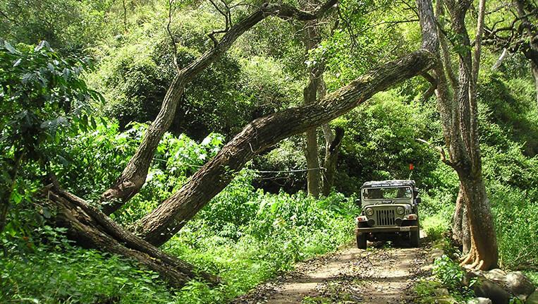 Coffee Land Chikmagalur, Karnataka