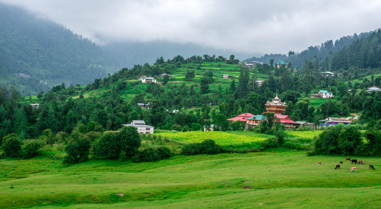 Panoramic View of Green Meadow Surrounded by Deodar Tree in Himalayas,Great Himalayan National Park,Sainj Valley, Shahgarh, Himachal Pradesh, India
