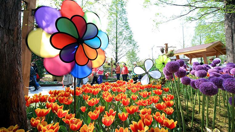 International Flower Festival, Gangtok