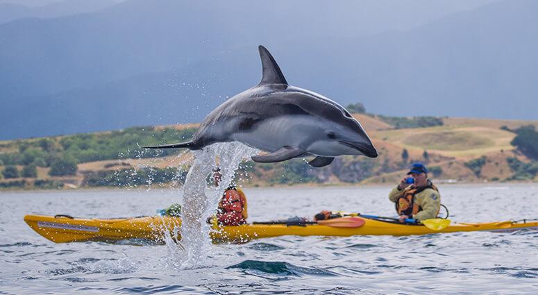 Kayak Alongside Dolphins