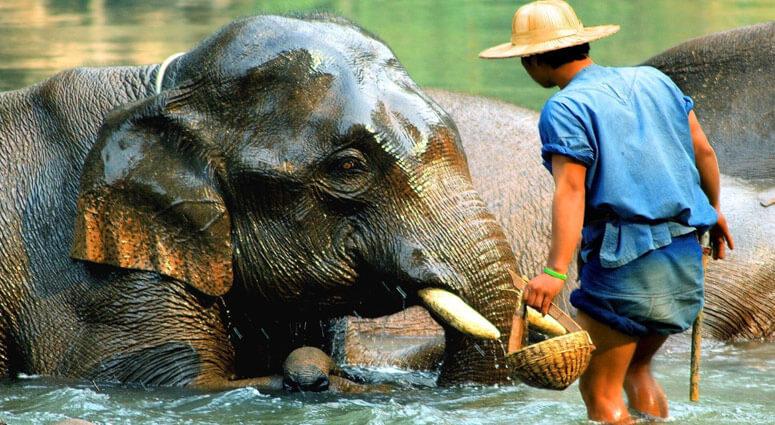Mae Ping Elephant Village