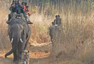 Bandhavgarh Elephant Safari