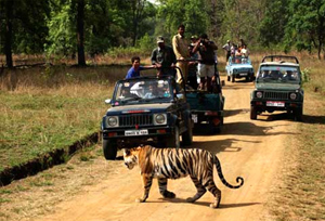 Jeep Safari in Bandhavgarh National Park