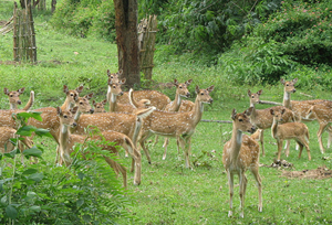 Wildlife in Bandipur National Park