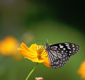 Golden Butterfly Tour of Kerala