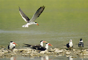 Birding in Chambal