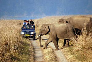 Jeep Safari in Corbett National Park