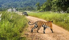 corbett-tiger-safari