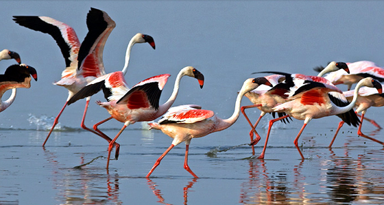 Dasada India  city photos : Ahmedabad Dasada Wildlife Sanctuary Tour Little Rann of Kutch