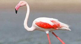 Delhi Bharatpur Weekend Tour