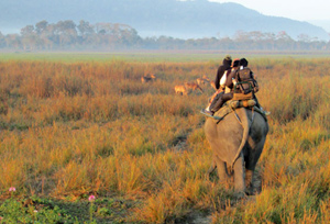 Explore One Horned Rhino during Assam Wildlife Tour