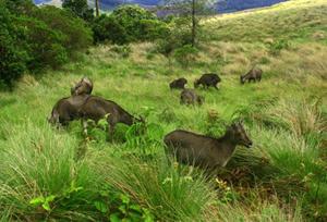 Eravikulam National Park Eravikulam Wildlife Sanctuary