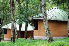 Punarjani Ayurvedic Resorts
