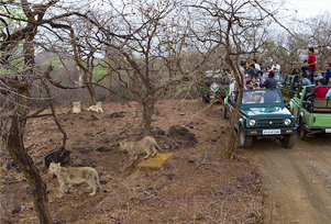 Gir National Park Sightseeing