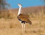 Great Indian Bustard Sanctuary Kutch