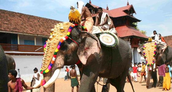Guruvayoor Tour From Cochin Book 2n 3days Guruvayoor