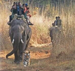 Incredible India Wildlife Tour