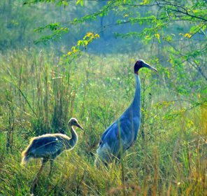 Jaipur Bharatpur Weekend Tour