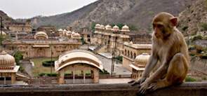 The Monkey Temple, Jaipur