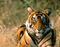 Jaipur Ranthambore Weekend Tour