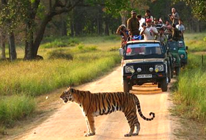 Jeep Safari in Kanha National Park